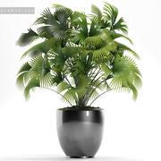 palm plant 126 3d model