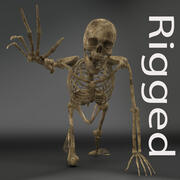 Human_Male_Skeleton_Rigged_MR-VR 3d model