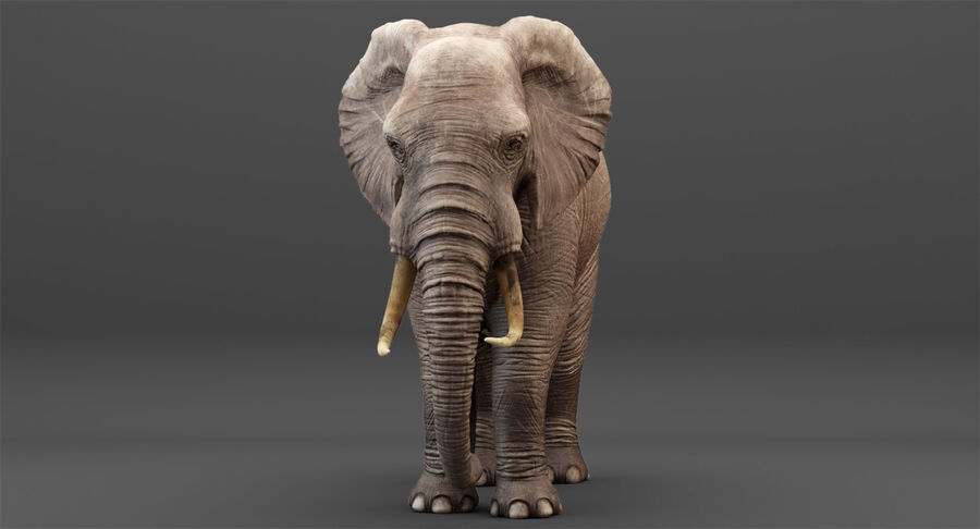 Rigged Elephant royalty-free 3d model - Preview no. 6