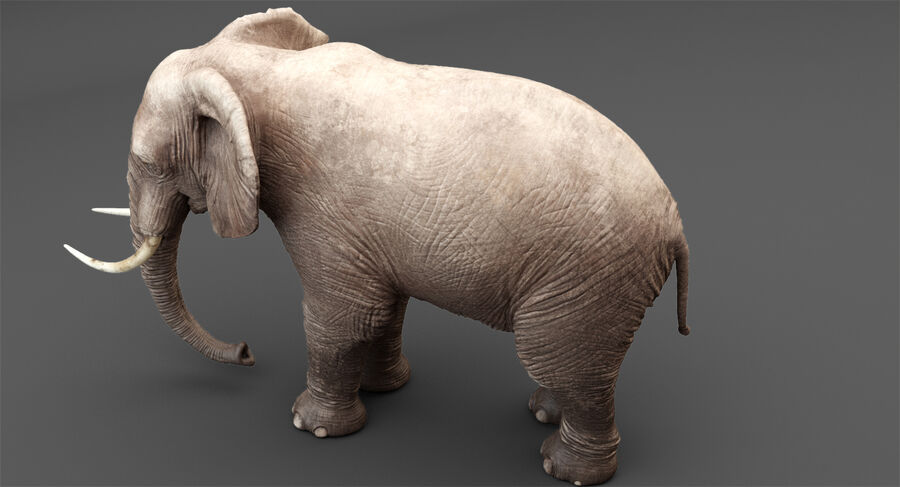 Rigged Elephant royalty-free 3d model - Preview no. 4