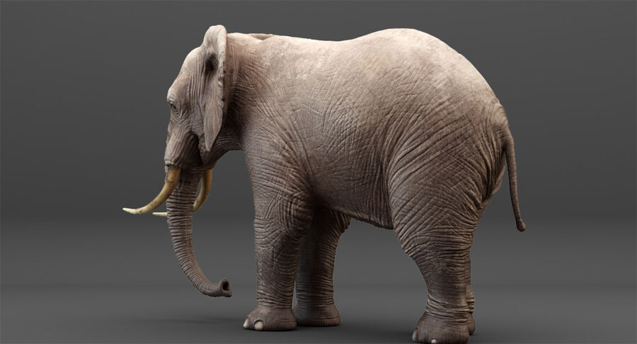 Rigged Elephant royalty-free 3d model - Preview no. 9