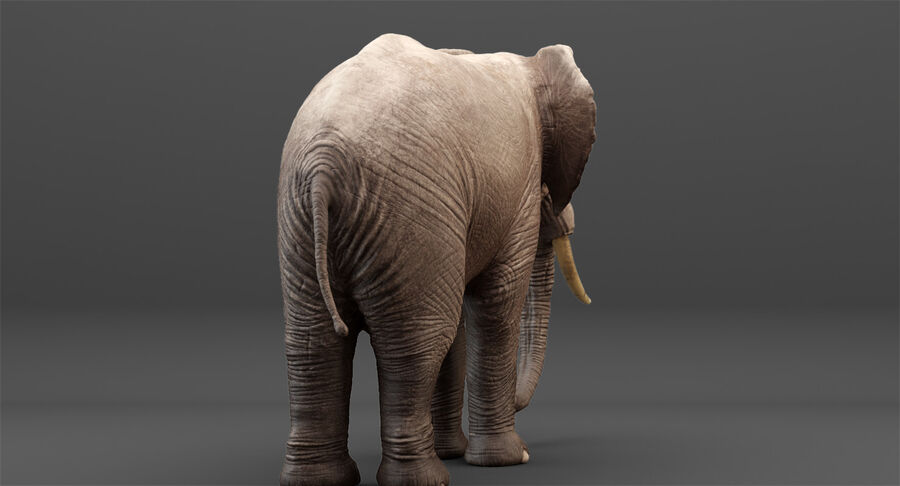 Rigged Elephant royalty-free 3d model - Preview no. 10