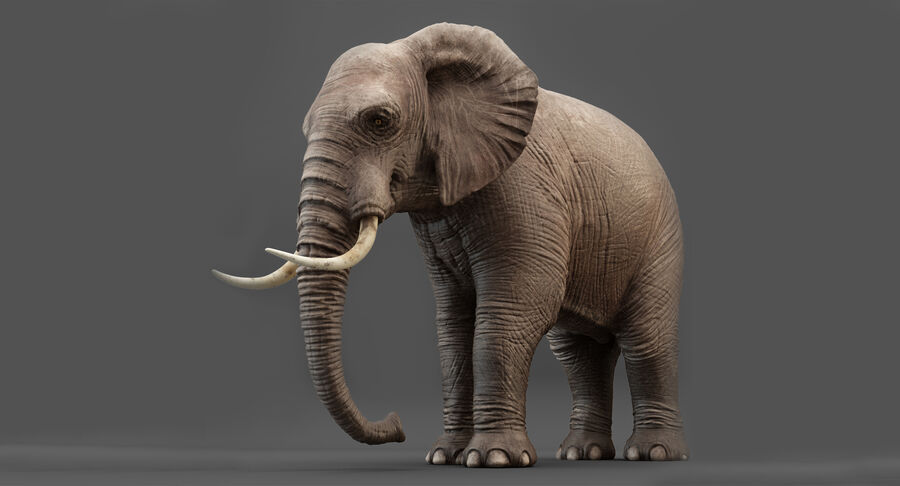 Rigged Elephant royalty-free 3d model - Preview no. 2