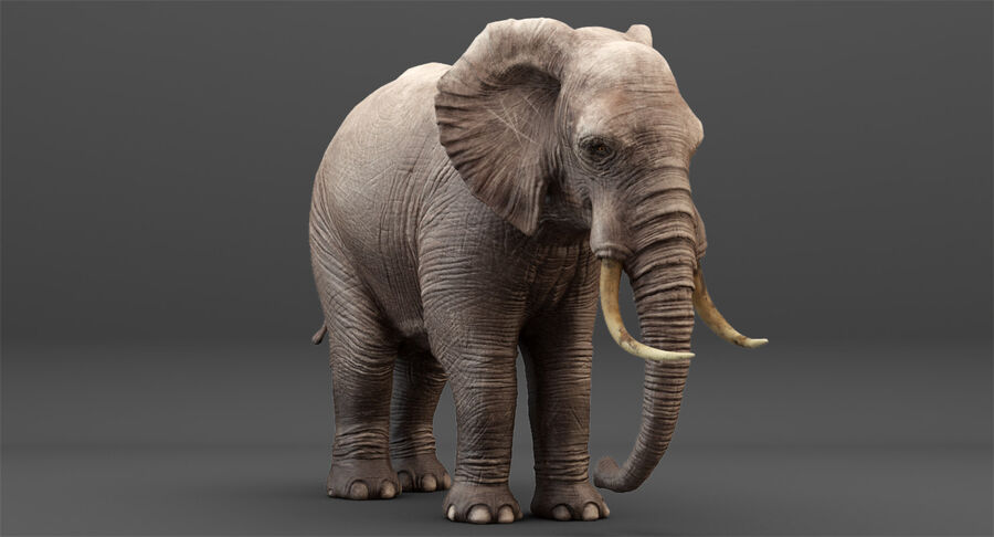 Rigged Elephant royalty-free 3d model - Preview no. 8