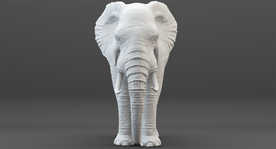 Rigged Elephant royalty-free 3d model - Preview no. 21