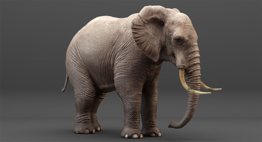 Rigged Elephant royalty-free 3d model - Preview no. 7