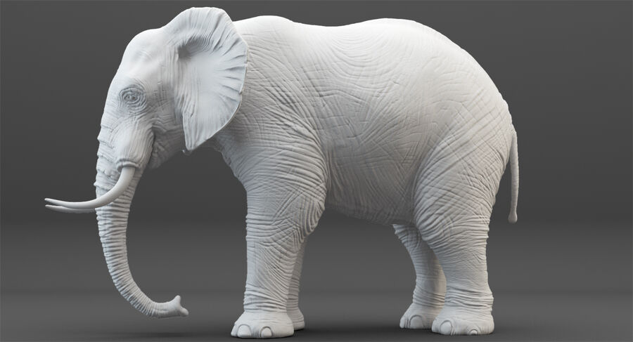 Rigged Elephant royalty-free 3d model - Preview no. 20