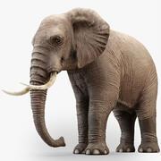 Rigged Elephant 3d model