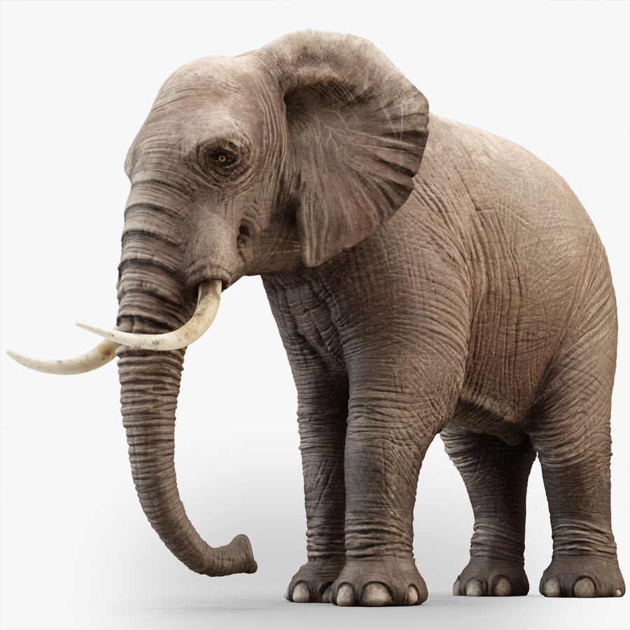 Rigged Elephant royalty-free 3d model - Preview no. 1