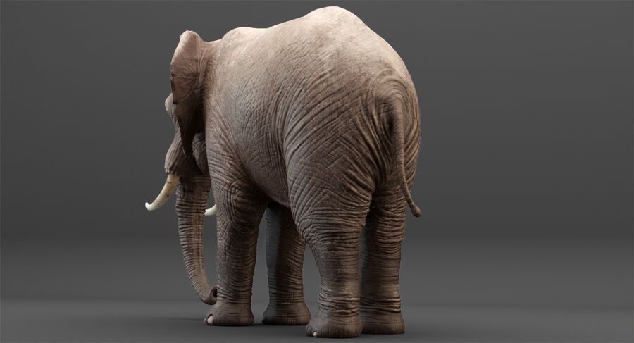 Rigged Elephant royalty-free 3d model - Preview no. 3