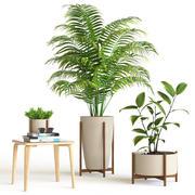 Ensemble de plantes 3d model