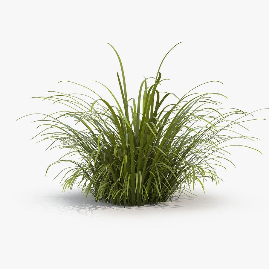 Wild Tall Grass 3d Model 19 Max Obj Ma Fbx C4d 3ds Free3d
