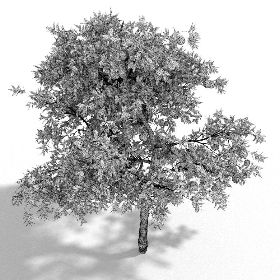 laranjeira (Citrus sinensis) royalty-free 3d model - Preview no. 6