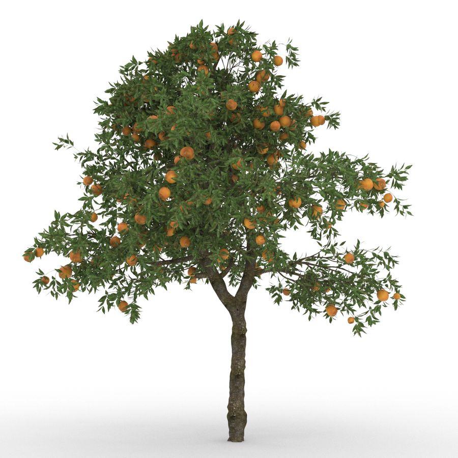 laranjeira (Citrus sinensis) royalty-free 3d model - Preview no. 2