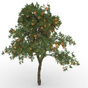 orange tree (Citrus  sinensis) 3d model