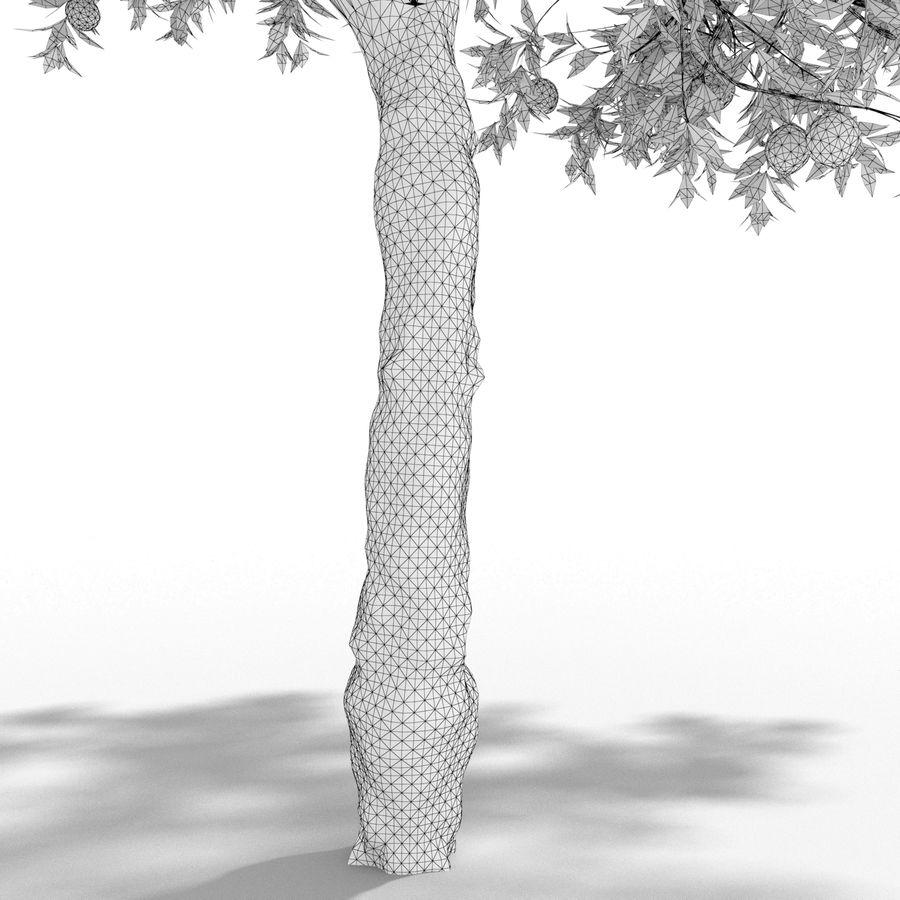 laranjeira (Citrus sinensis) royalty-free 3d model - Preview no. 4