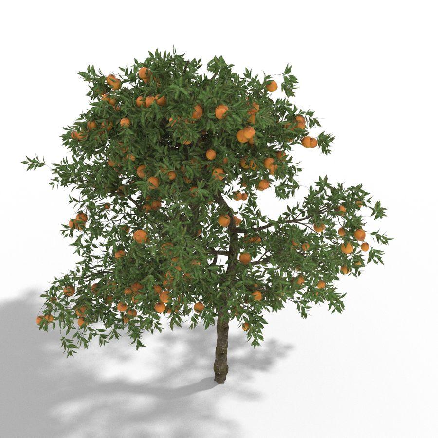 laranjeira (Citrus sinensis) royalty-free 3d model - Preview no. 3