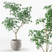 Kleine boom in pot 3d model