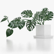 Monstera Leaves 009 3d model