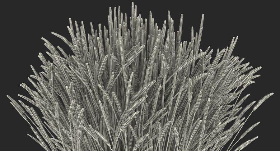Calamagrostis Karl Foerster Grass royalty-free 3d model - Preview no. 18