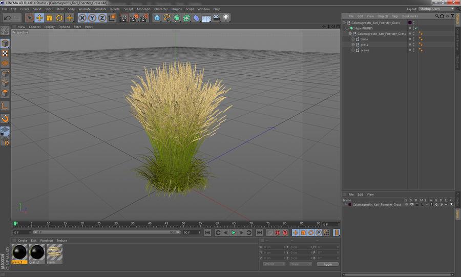 Calamagrostis Karl Foerster Grass royalty-free 3d model - Preview no. 14