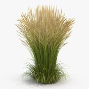 Calamagrostis Karl Foerster Grass 3d model