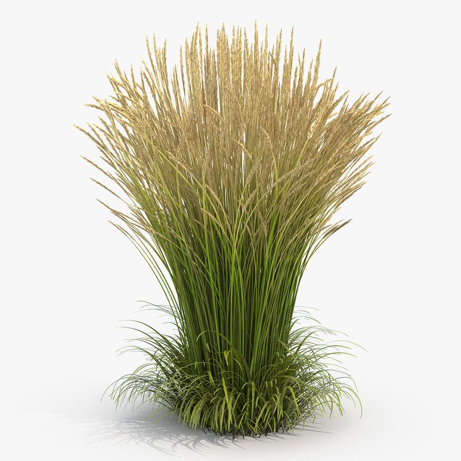 Calamagrostis Karl Foerster Grass royalty-free 3d model - Preview no. 1