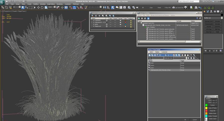 Calamagrostis Karl Foerster Grass royalty-free 3d model - Preview no. 12