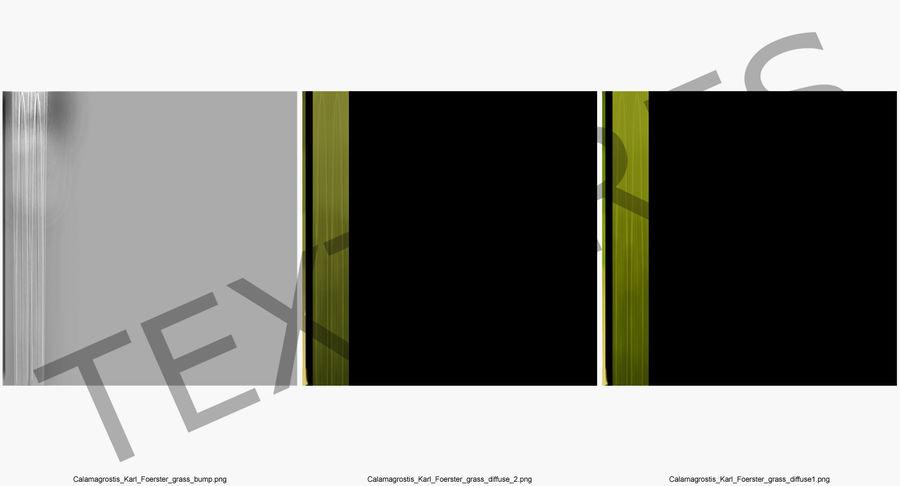 Calamagrostis Karl Foerster Grass royalty-free 3d model - Preview no. 11