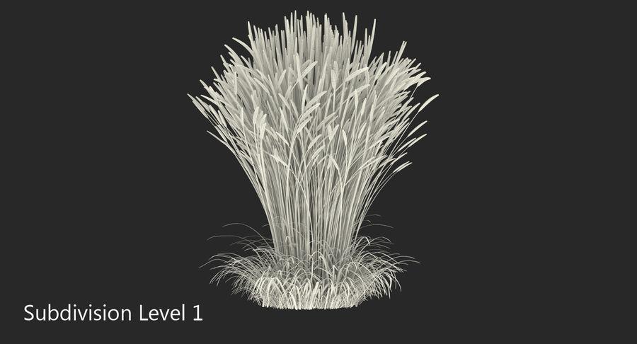 Calamagrostis Karl Foerster Grass royalty-free 3d model - Preview no. 9