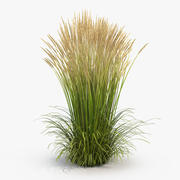 Feather Reed Grass Karl Foerster 3d model