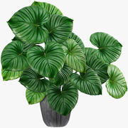 Folhas tropicais 001 3d model