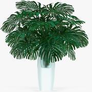 Monstera Leaves 008 3d model