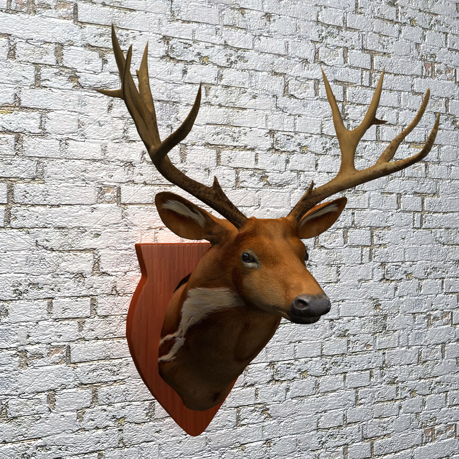 Taxidermie cerf royalty-free 3d model - Preview no. 13
