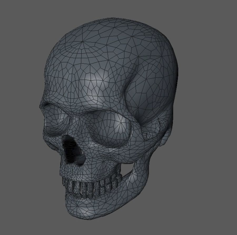 Crâne humain royalty-free 3d model - Preview no. 5