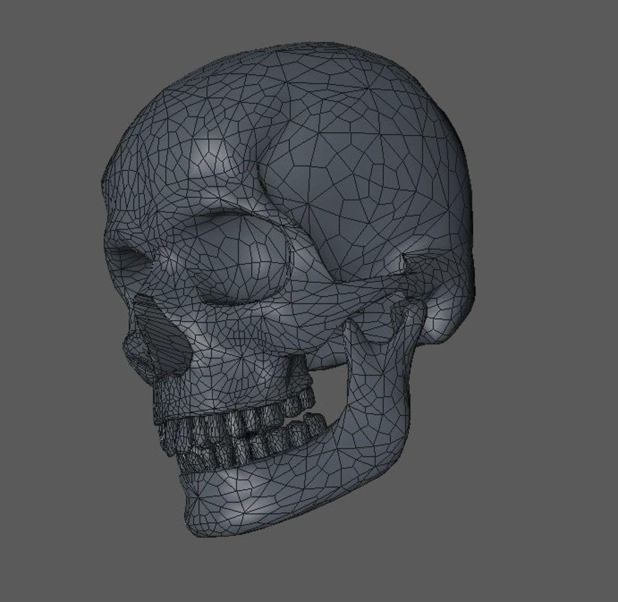 Crâne humain royalty-free 3d model - Preview no. 4