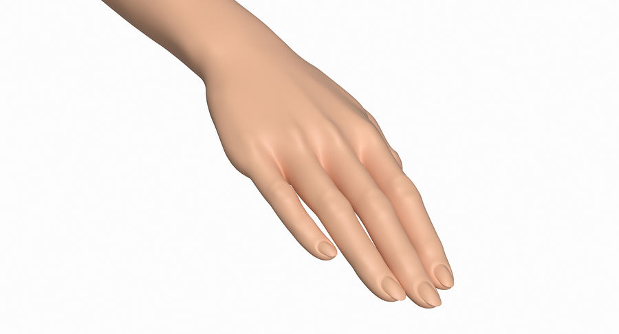 Female Arm A (Pose C) royalty-free 3d model - Preview no. 17