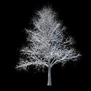 Kış ağaç 01 3d model