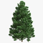 CR01 Weihnachtsbaum Tanne 01 3d model