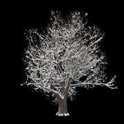 Winter Tree 05 3d model