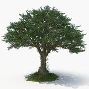 Дерево (2) 3d model