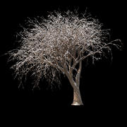 Albero d'inverno 013 3d model