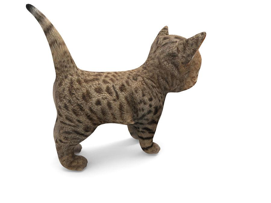 sevimli kedi yavru kedi düşük Poli royalty-free 3d model - Preview no. 5