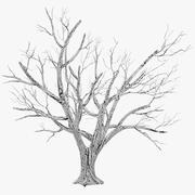 나무 겨울 3d model