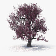 Blossom Tree 03 3d model