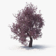 Blossom Tree 04 3d model