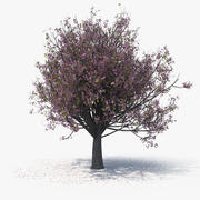 Blossom Tree 07 3d model
