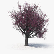 Blossom Tree 08 3d model