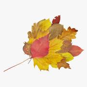 秋の葉の花束 3d model