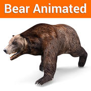 Brown Bear Animated 3d model